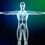La corporeità secondo 'Credere oggi': noi siamo corpo