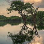 Nella giornata del creato la Chiesa invita a 'coltivare' la biodiversità