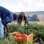 Coronavirus: perse 500.000 giornate di lavoro nei campi